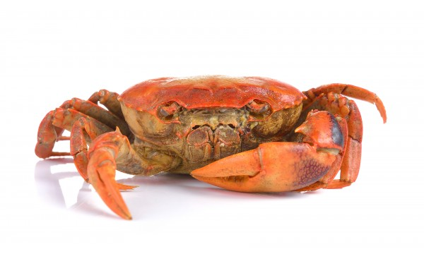 Crab Extract (edible)