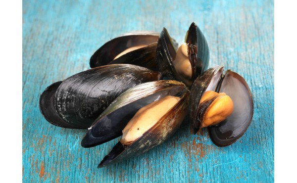 Mussel Products